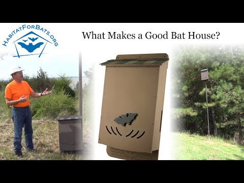 What Makes A Good Bat House - with Jim Kennedy