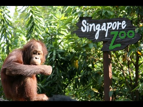 Singapore Zoo - animal in the zoo - Singapore travel