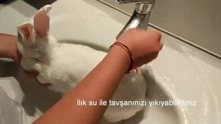Tavşan Nasıl Yıkanır? | How to bath a rabbit ?