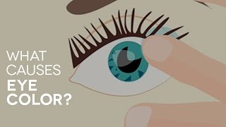 What causes eye color? SmartBuyGlasses Q&A #1
