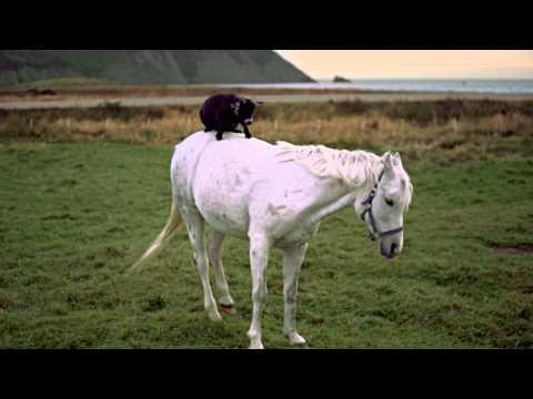 Goat on a Horse, Newfoundland and Labrador