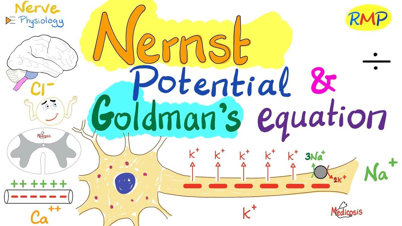 Download Nernest Potential and Goldman's Equation   Nerve Physiology