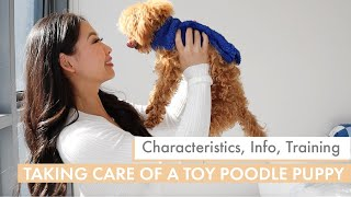 How to care for a TOY POODLE PUPPY | What you need to know before getting one