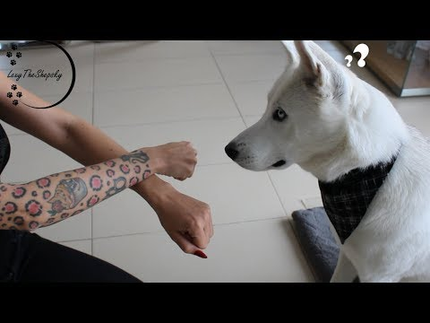Performing Magic For My Dog!