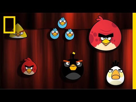 What Makes Angry Birds Soar? | Nat Geo Live