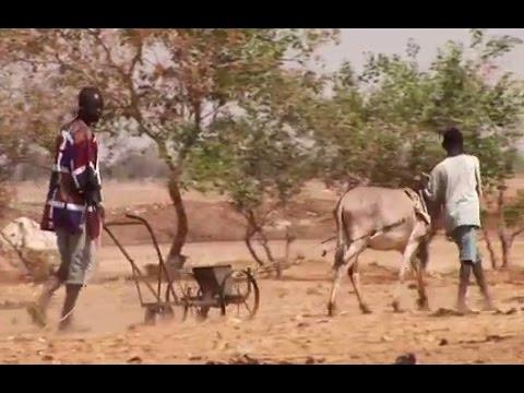Sine Saloum Delta Senegal