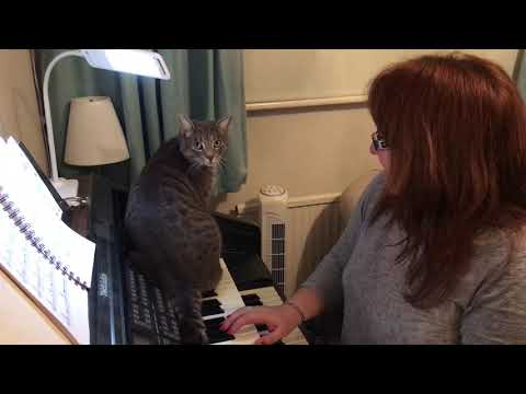 Paddy The Cat Playing Piano To I Will Survive 16 Jan 2019