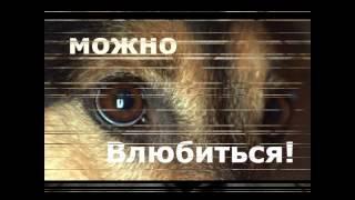 Песня брошенных собак