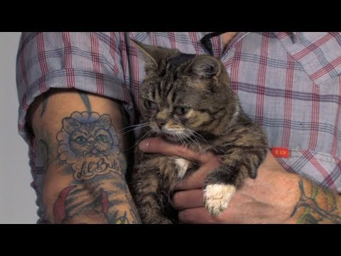 The Story of Lil BUB