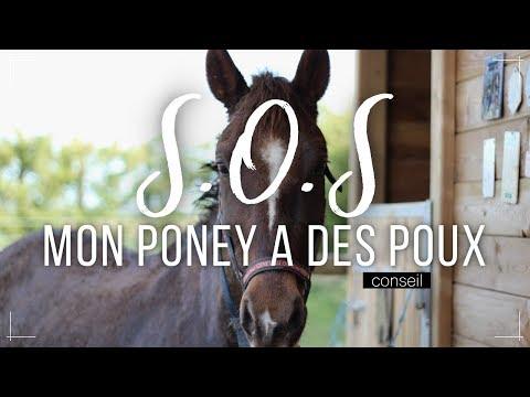 SOS, MON PONEY A DES POUX !