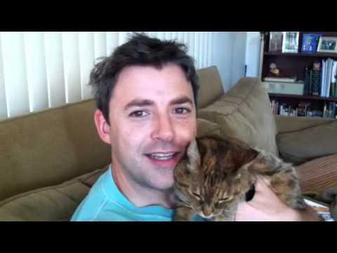 Funny Cat Attack