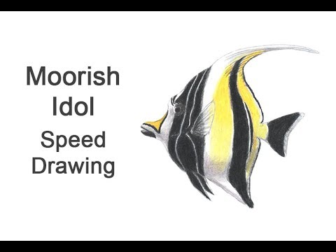 Moorish Idol Fish Time-lapse / Speed Drawing