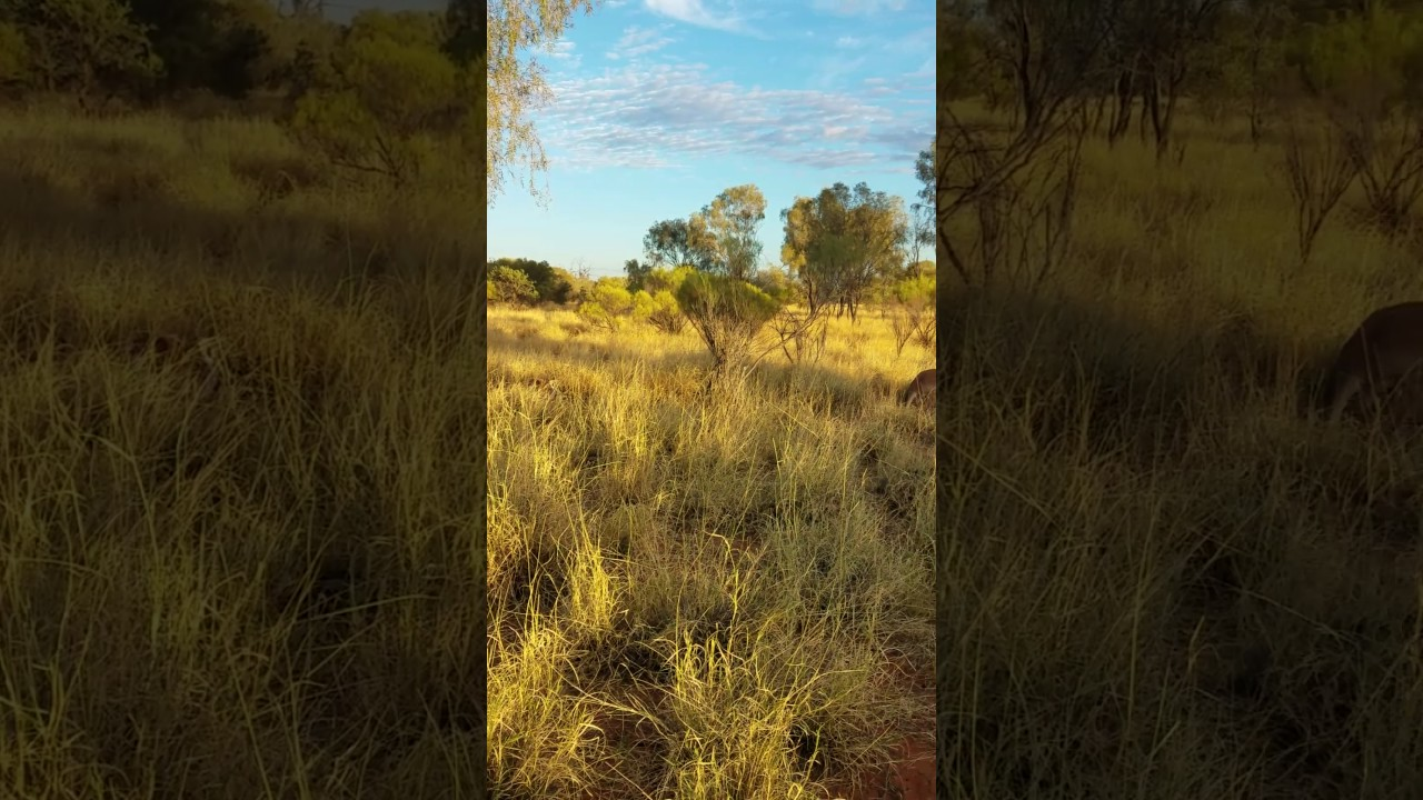 The Kangaroo Sanctuary Alice Springs YouTube - Kangaroo sanctuary alice springs