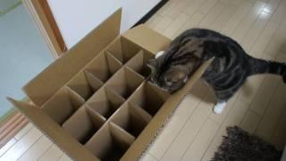 入れない箱とねこ。-The box which Maru can