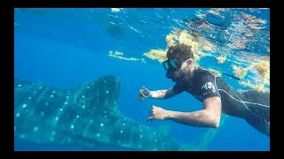 EP: 14 Snorkel With Whale Sharks