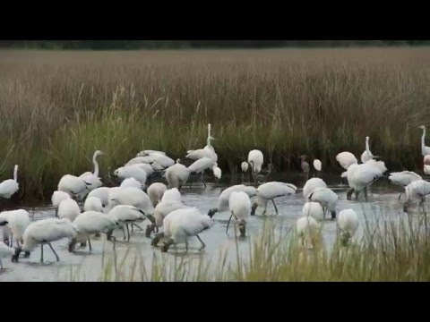 The Great Florida Birding Trail - Panacea Florida