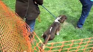 Agility Nuts - That Springer Spaniel With Waggy Tail - 14th/15th May 2011 Ruddington