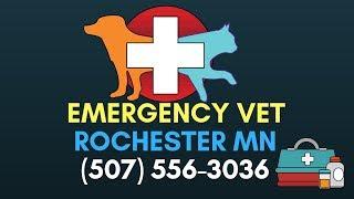 24 Hour Vet Clinic Rochester MN  Animal Health Care Veterinary Hospital Rochester MN  (507) 556 3036