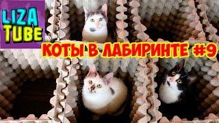 Лабиринт #9 для кошек 😺 Три кота проходят лабиринт 😂