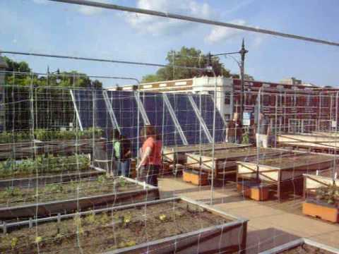 Organic Rooftop Farm in Chicago