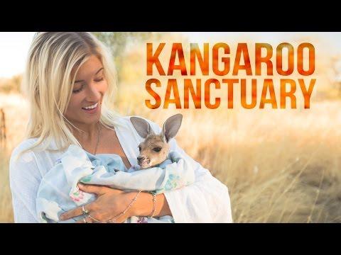 Alice Springs Kangaroo Sanctuary