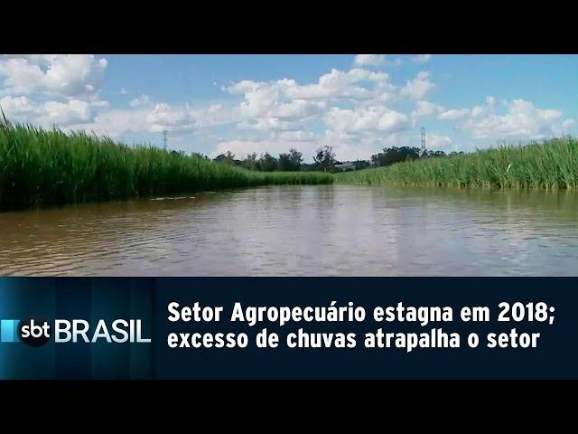 Setor Agropecuário estagna em 2018; excesso de chuvas atrapalha o setor | SBT Brasil (02/03/19)