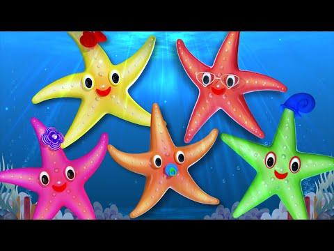 Starfish Finger Family | 3D Nursery Rhymes For Kids | Family Finger Song