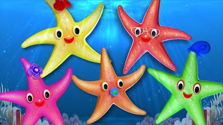 Starfish Finger Family | 3D Nursery Rhymes For Kids | Family Finger Song | kids tv cartoons