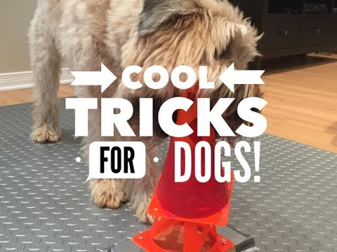7 Dog Tricks! Cool And Cute!