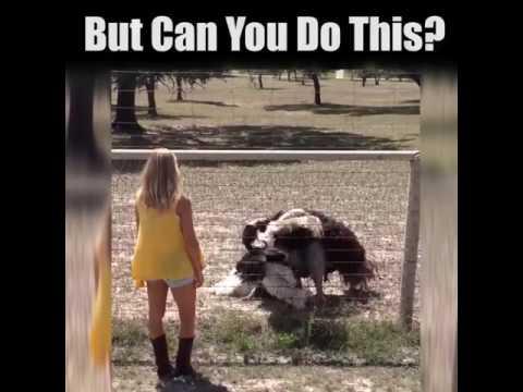 Ostrich decides to do a nice little dance