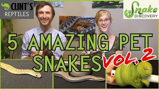 snake-discovery-and-clint-s-reptiles-five-more-of-the-best-pet-snakes-you-could-possibly-get