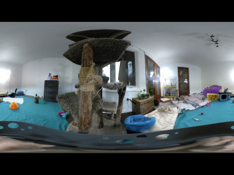 Kitten 360 VR - with guest Sarah Donner!