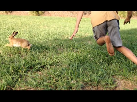 Hare chased and caught BAREHANDED | TDB
