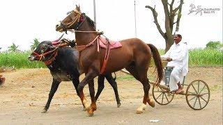 HORSE and BULL CART || घोडा बैल गाडी