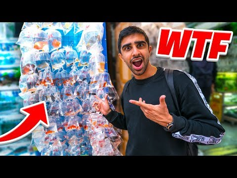 I went to The STRANGEST SHOP in CHINA!
