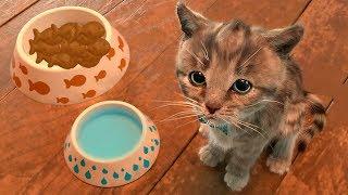 Приключение крошки котенка. Смешные наряды на вечеринку к друзьям