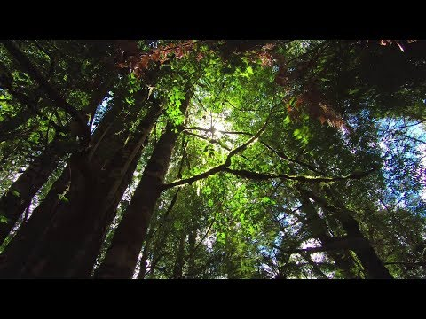 Journey to the Valley of the Giants (GoPro Hero6 Black)