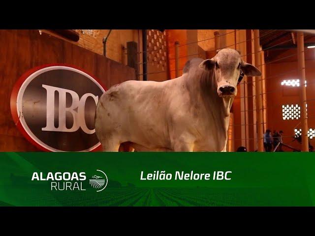 Leilão Nelore IBC fatura mais de R$ 3,7 milhões e cresce 38%