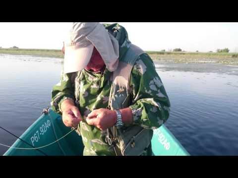 видео рыбалка на сазана в астрахани 2016 году