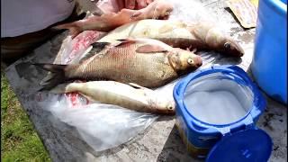 Рыбалка на реке ВексаЗакоптили улов