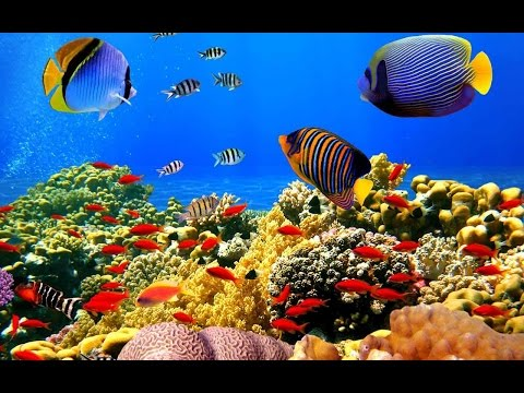 Aquarium Live Wallpaper - For Android - Free Download