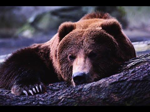Фильм 'Медведь' (Аюу) Bear - Ruslar.Biz