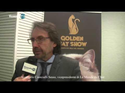 Golden Cat Show, concorso e intrattenimento... Lo raccontano gli organizzatori a VicenzaPiu.Tv