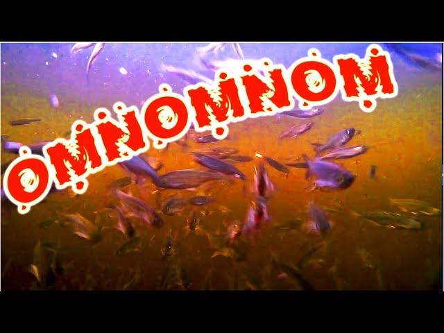 МЕГА ЖОР ОМНОМНОМ! ВОТ ЭТО АППЕТИТ! Прикол на рыбалке, много голодной рыбы в реке. РЖАКА