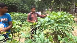 Home Garden Established by Women Farmers in Southern Bangladesh
