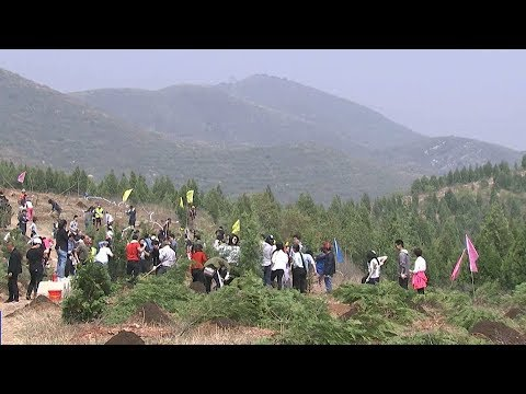 Tree-planting in Beijing encourages foreigners and locals to work together