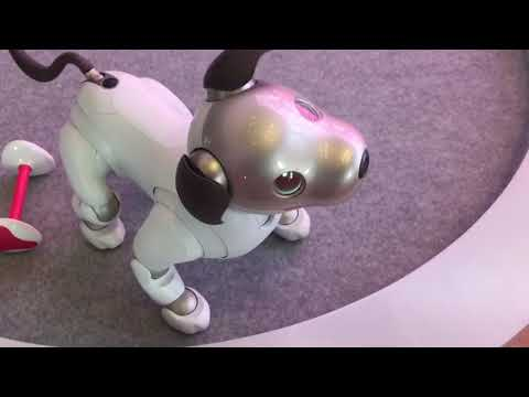 Aibo ERS-1000 at Sony Square NYC