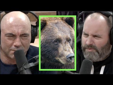 Man Had His Face Eaten Off By a Grizzly Bear w/Tom Segura   Joe Rogan