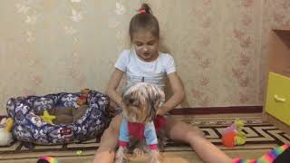 Собака-друг человека | Живой Взгляд