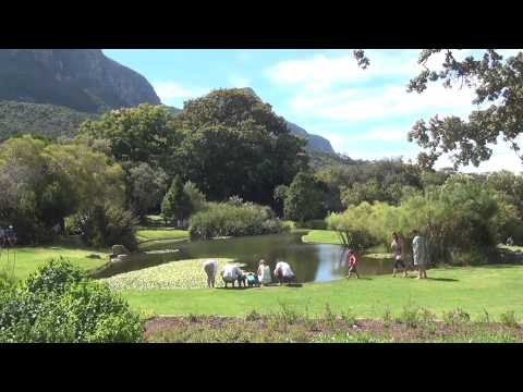 Kirstenbosch Botanical Gardens in Cape Town, South Africa